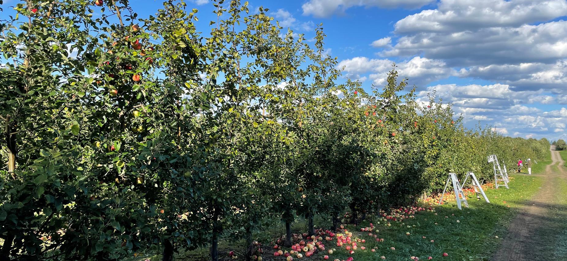 Beak & Skiff Apple Orchard